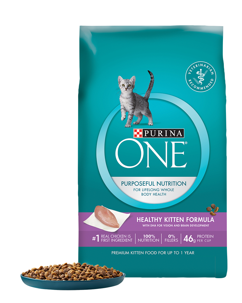 Kittens transparent food. Healthy kitten dry cat
