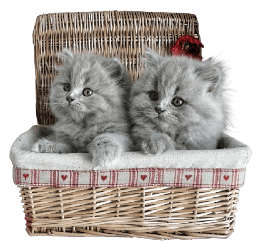 Kittens transparent gray. Small in basket png