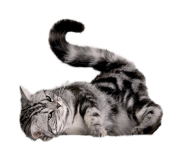 Kittens transparent gray. Cat png clipart free
