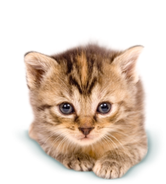 Kittens transparent pet. Kitten rehoming service connection