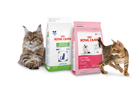Kittens transparent royal. Home canin canada require