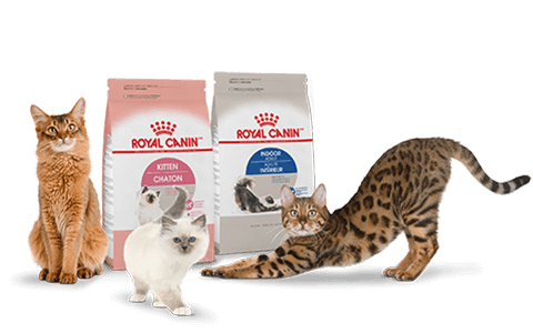 Kittens transparent royal. Pet pantry rncrock n