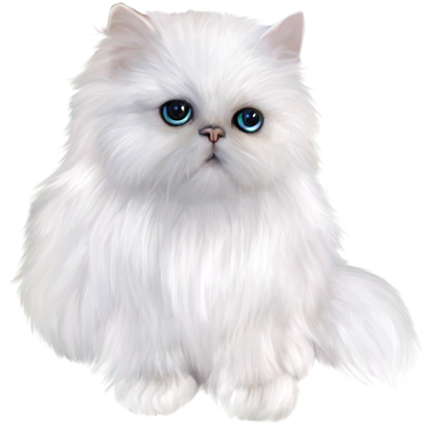 Kittens transparent white. Persian cat clipart a