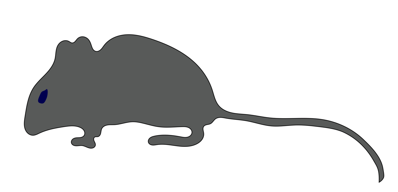 Kitty clipart rat. Mouse gerbil rodent cat