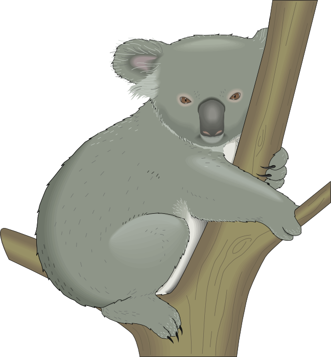 Koala clipart branch. Graphics of koalas on