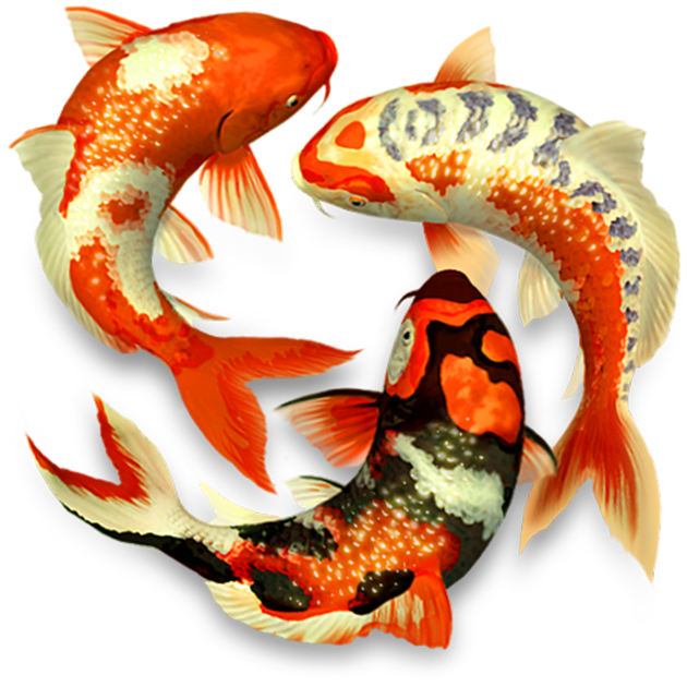 Pond d on the. Koi fish png svg free download