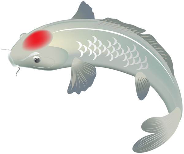 White clip art image. Koi fish png clipart royalty free stock