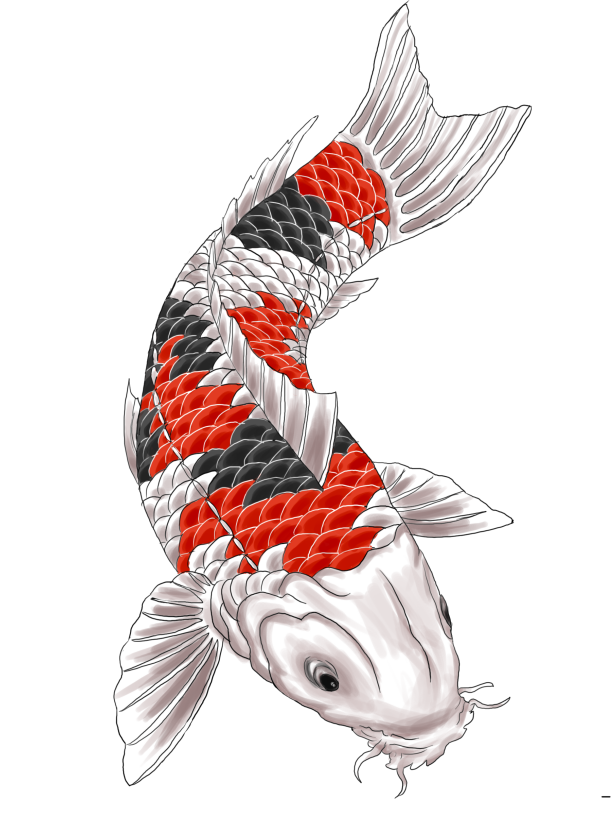 Koi fish tattoo png. Design and displacement