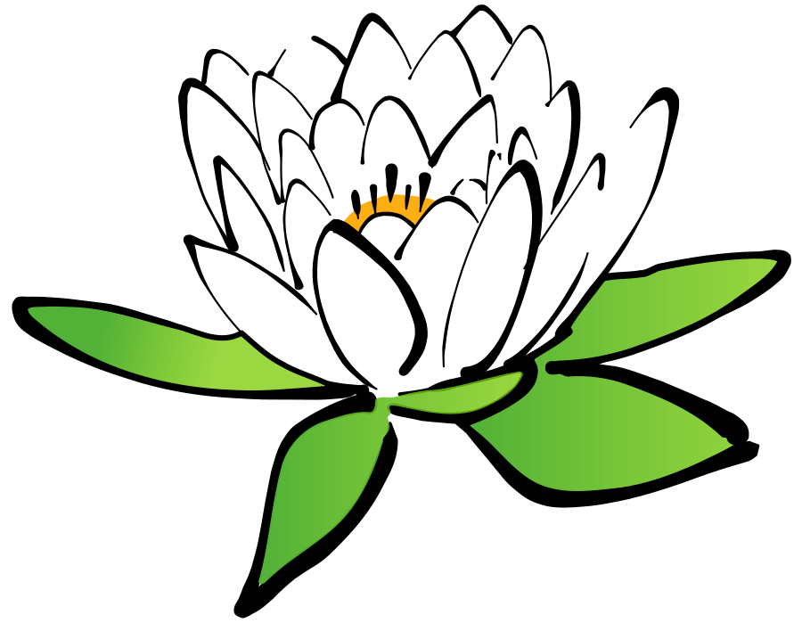 Lotus flower vector png. Free floral design clipart