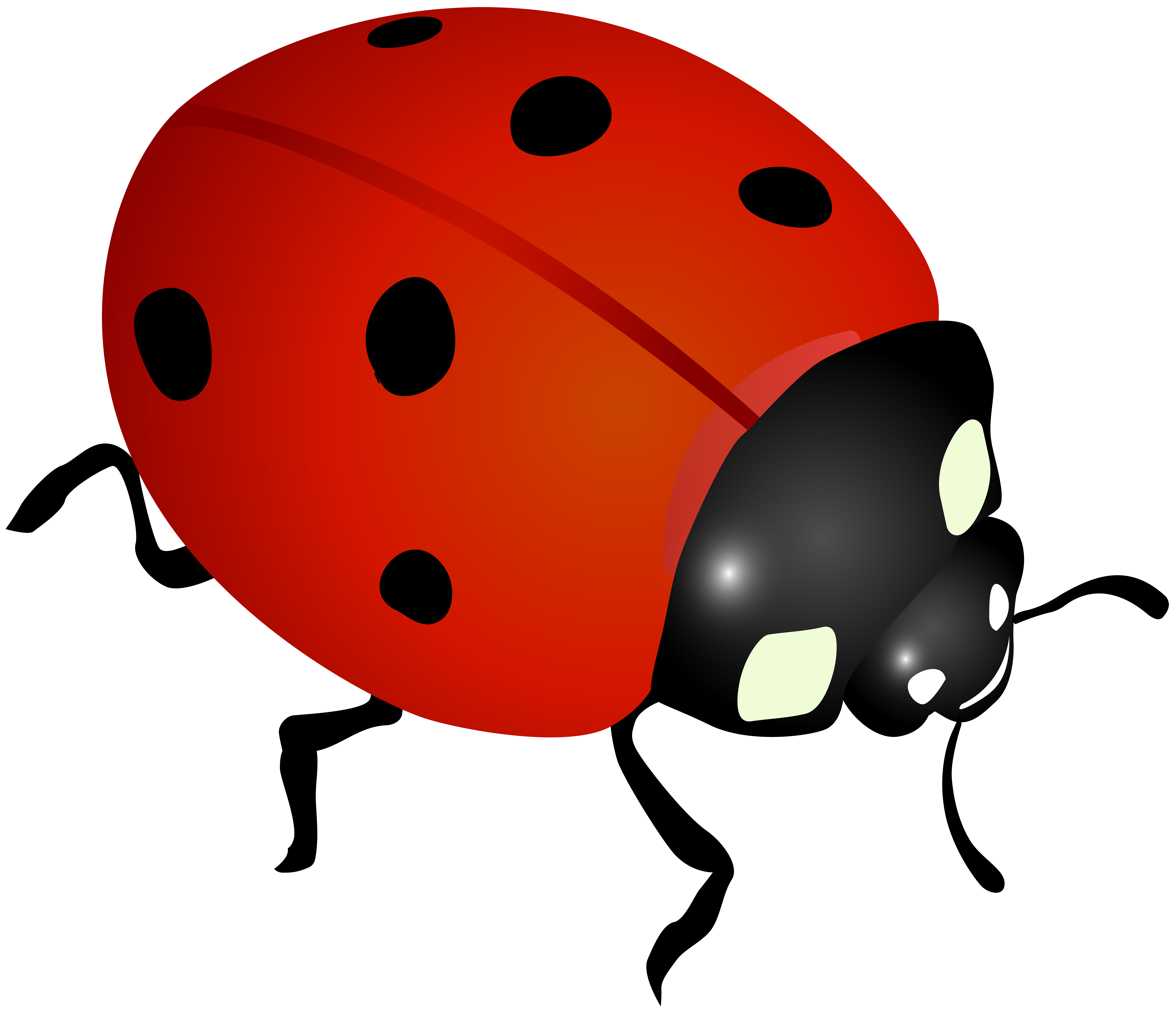 Ladybug clipart. Clip art image gallery