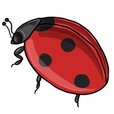 Ladybug clipart cycle. Day lily clip art