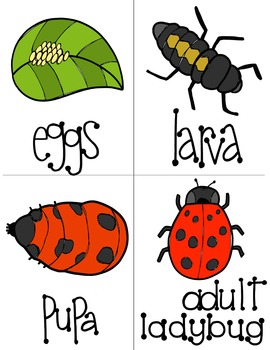 Ladybug clipart cycle. Life reader worksheets and