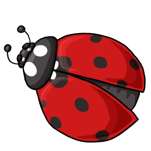 Ladybug clipart cycle. Clip art http www