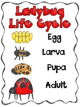 Ladybug clipart cycle. Best science images