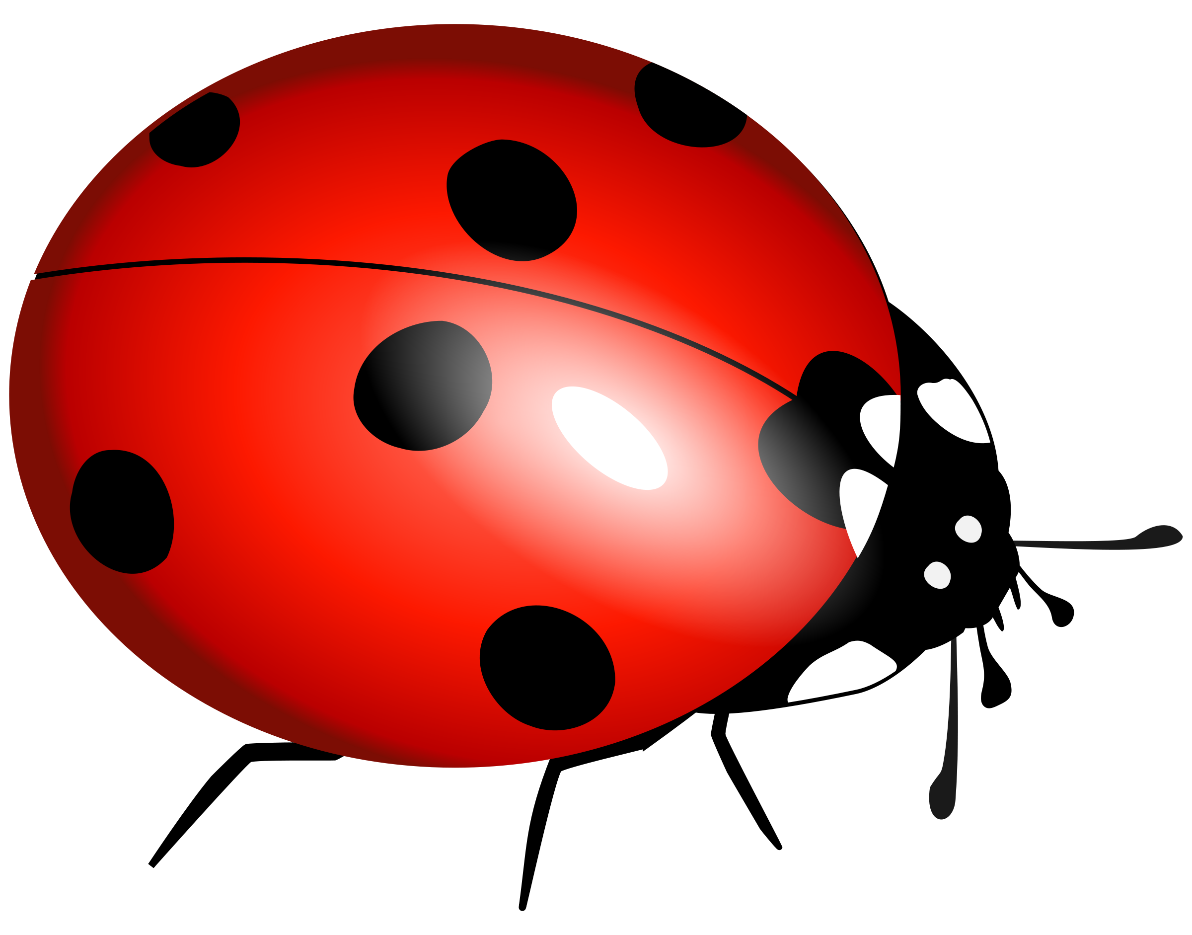 Ladybug clipart one object. Isolated stock photo by