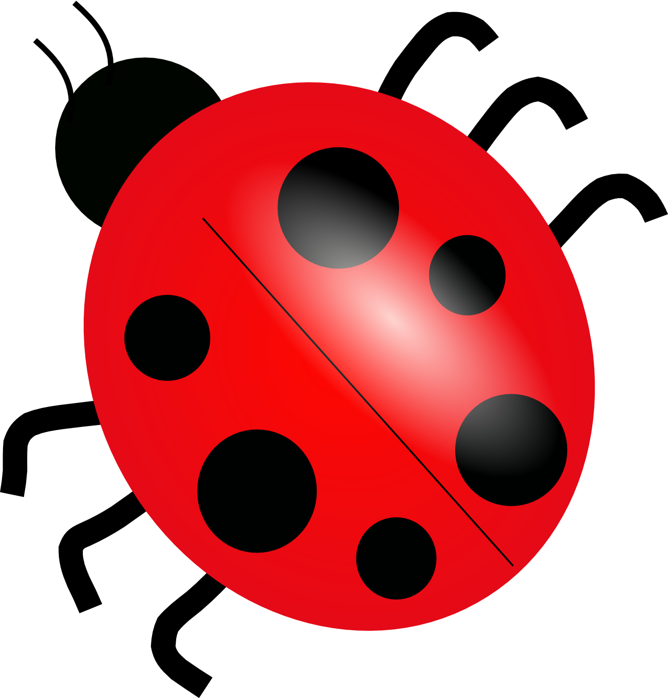 transparent ladybug top view