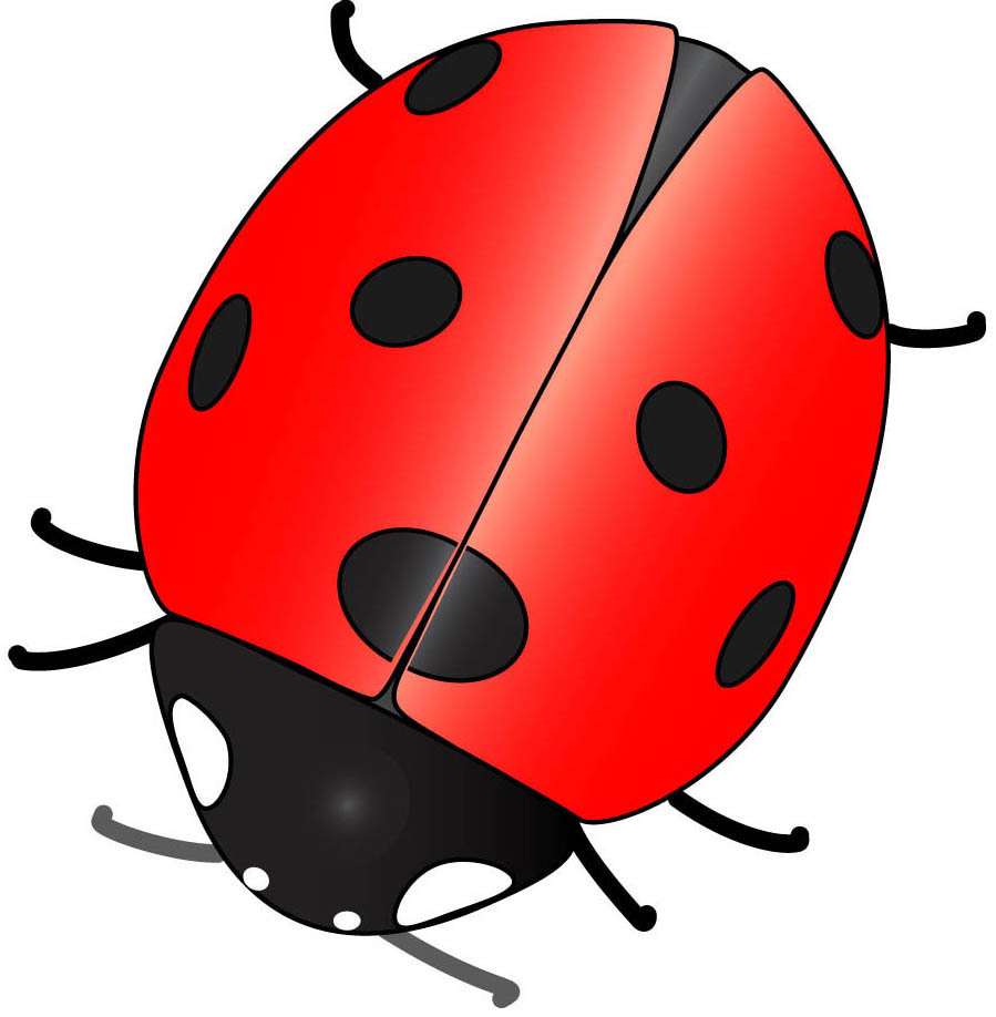 Ladybug clipart red animal. Cute drawings animals of