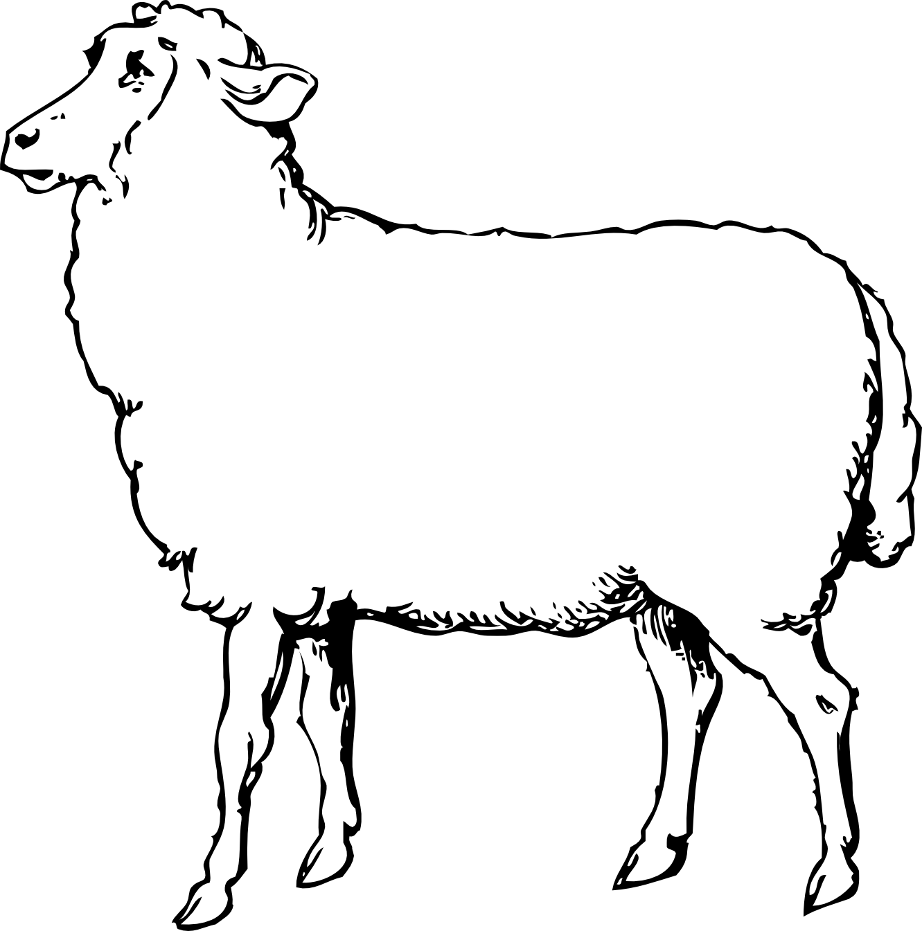 Drawing sheep illustrated
