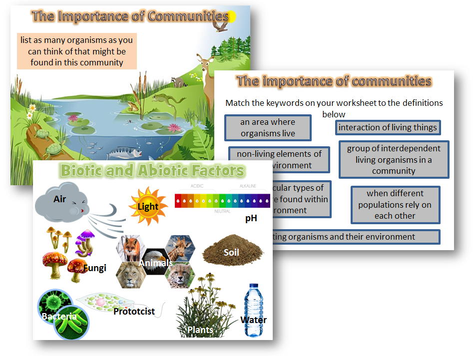 Land clipart abiotic. Organising ecosystems biotic and