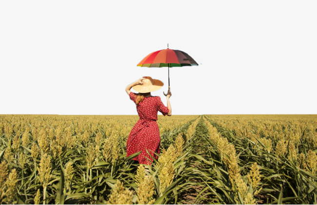 Large sorghum fields figure. Land clipart beautiful land clip freeuse library