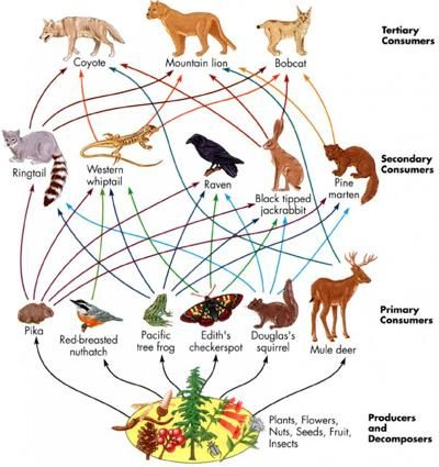 Land clipart grassland biome. Food chain too cool