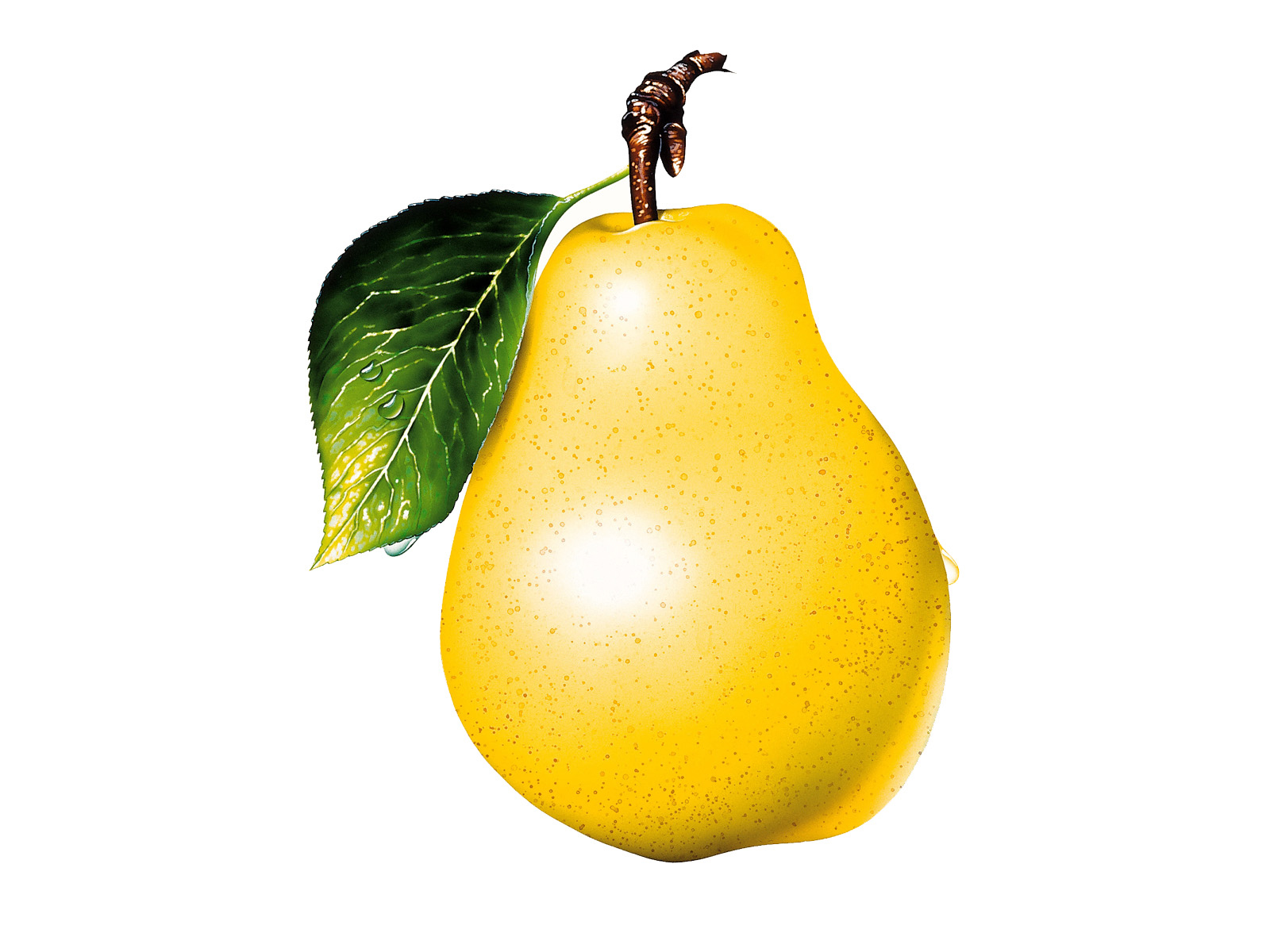 Large pear. Free pictures download clip