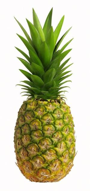 Large pineapple. Best clipart clipartion com