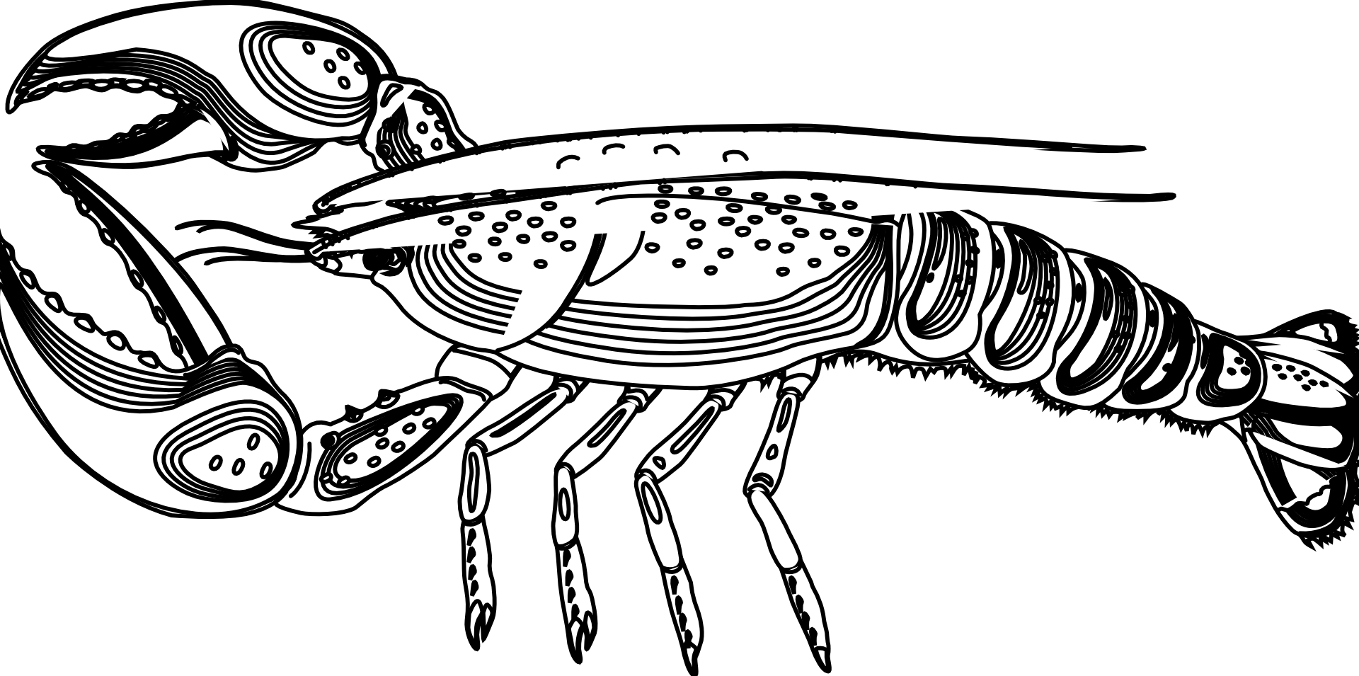Larry lobster png. Exelent the coloring pages