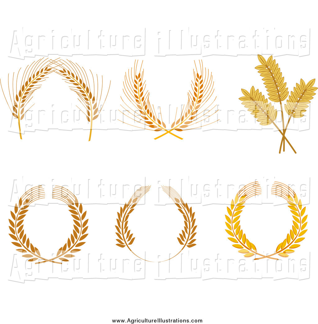 Laurel clipart wheat. Agriculture of grain wreaths banner freeuse library
