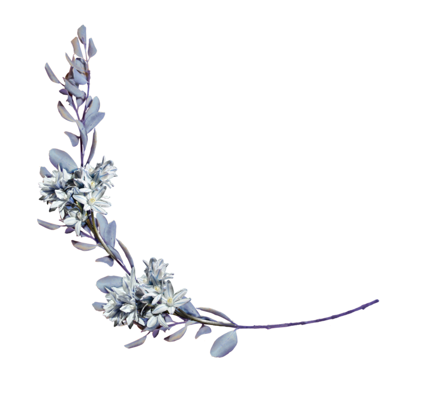 Hyacinths with a branch. Laurel clipart floral clip free download