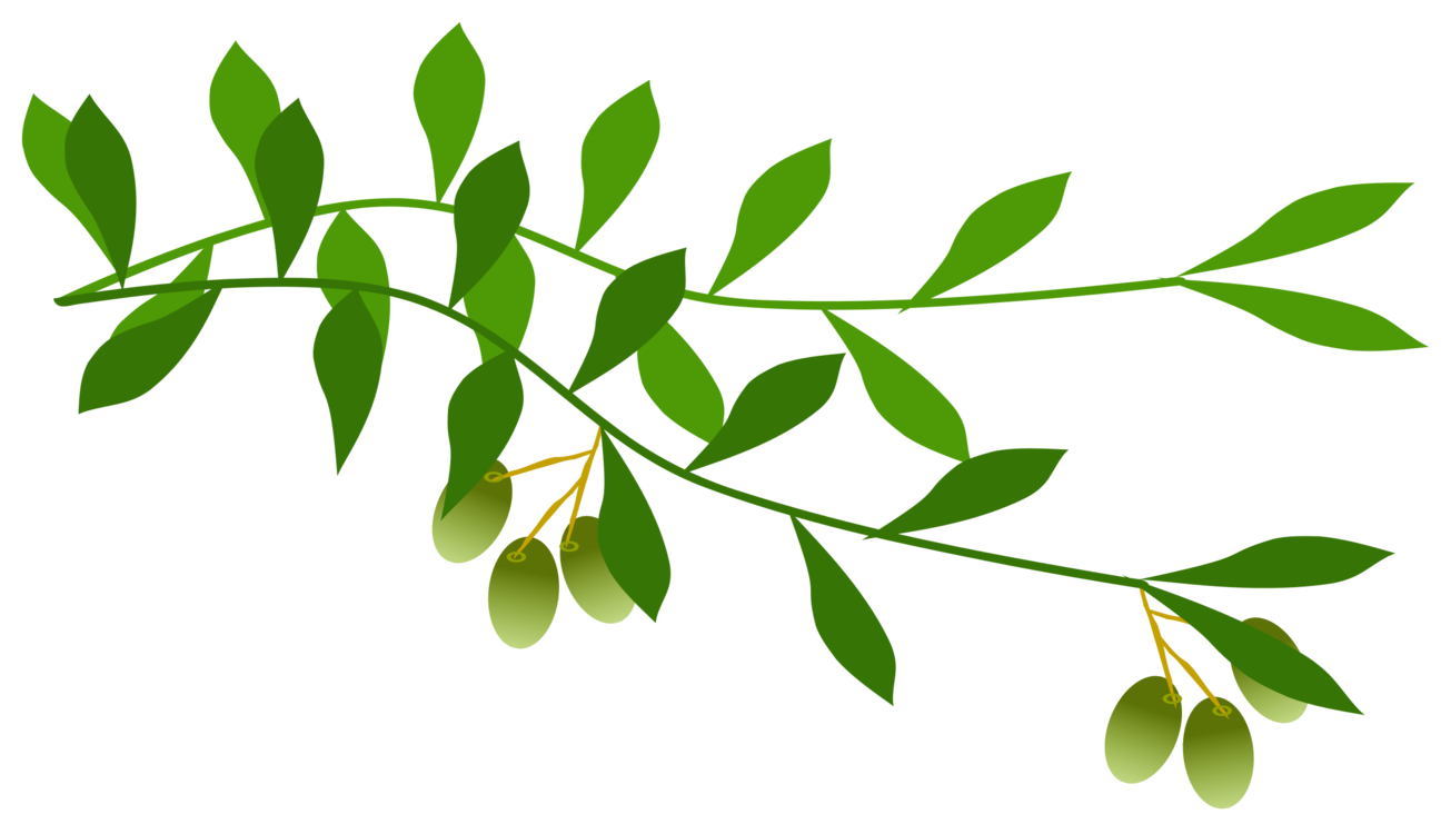 Laurel drawing oak branch. Olive leaf wreath tree