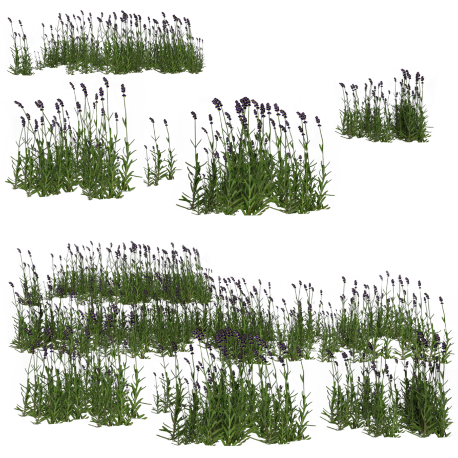 Lavender bush png. By brokenwing dstock on