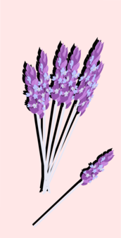 Lavender drawing png. English computer icons watercolor