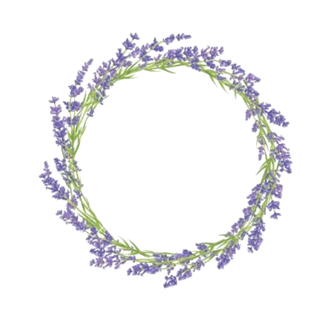 Lavender drawing png. Flower pictures and cliparts