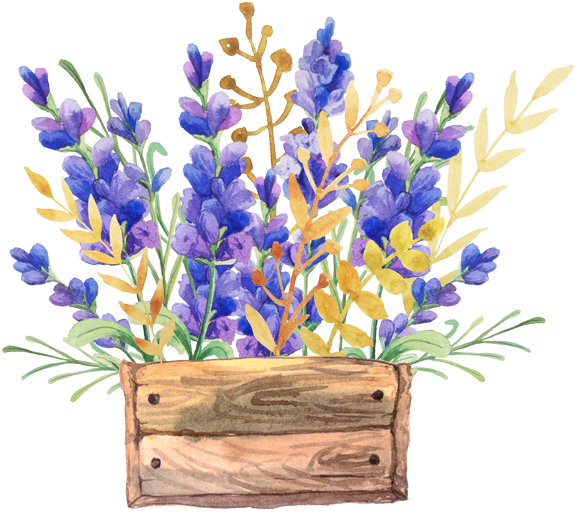 Lavender drawing png. Download english watercolor painting