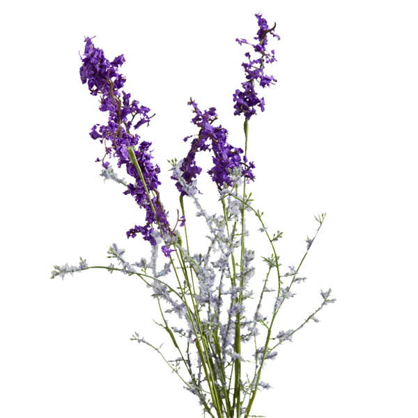 Lavender drawing png. Collection of high
