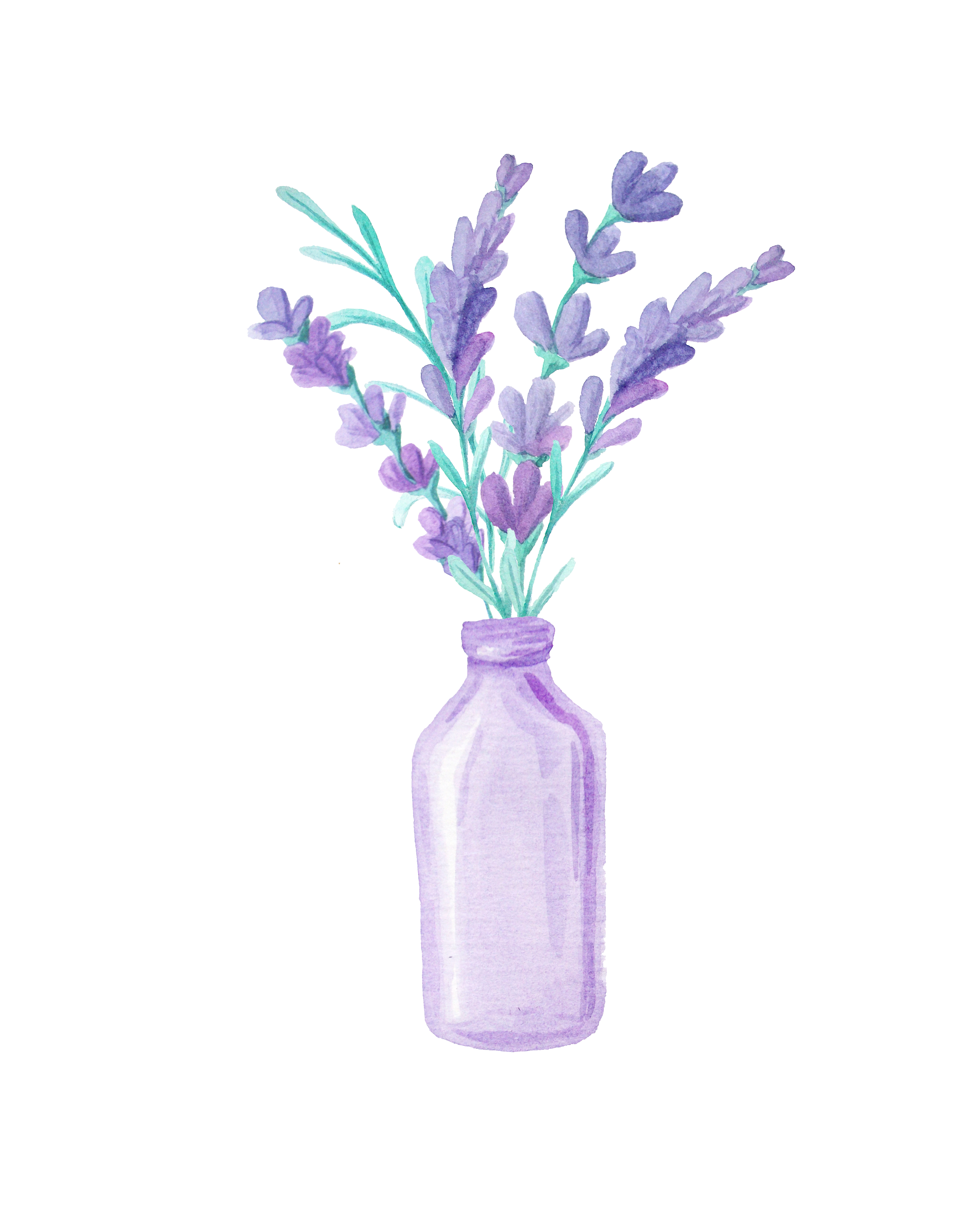 Lavender drawing png. Beautiful transprent free download