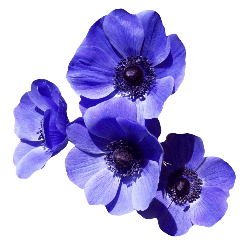 Lavender flower png. Purple free images toppng