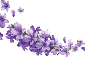 Lavender flowers png. Flower image related wallpapers