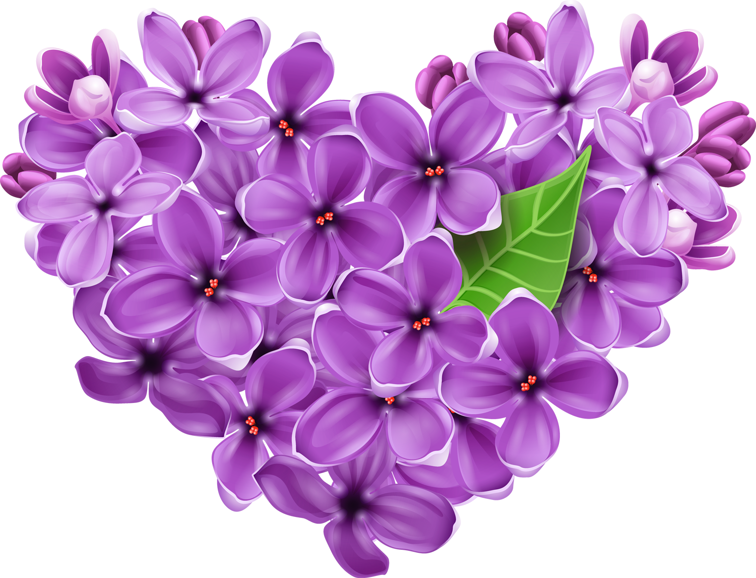 Lavender heart png. Purple lilac picture gallery