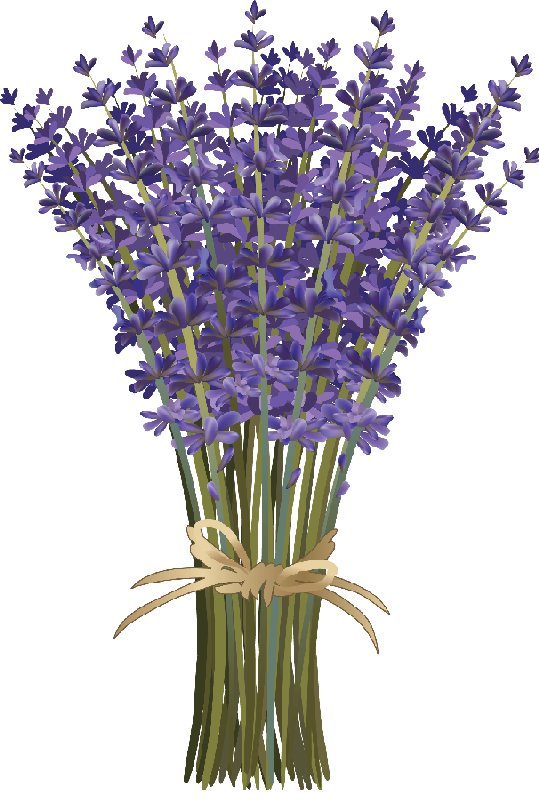 Bouquet vector bunch flower. Lavender layered long stemmed