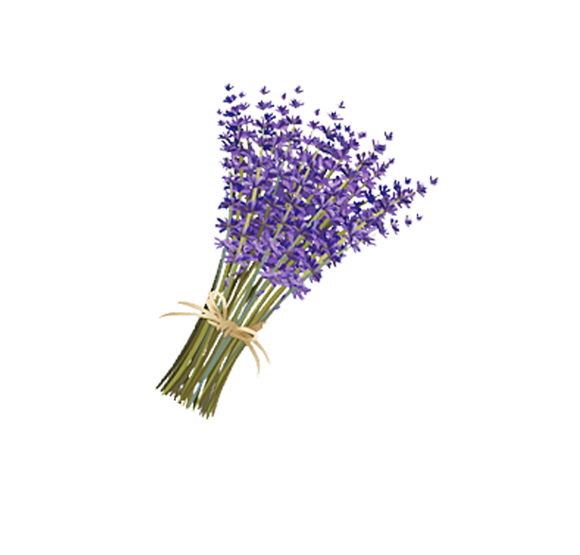 Lavender drawing png. Violet a bouquet of