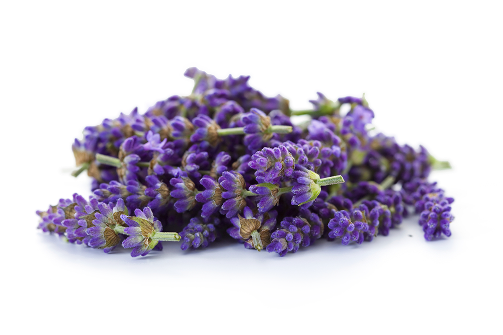 Lavender png. Images in collection page