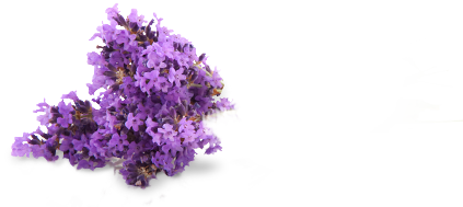 Lavender png. Clean pine sol cleansupsup
