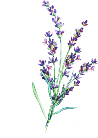 Lavender png. Moisturizing hair oil with