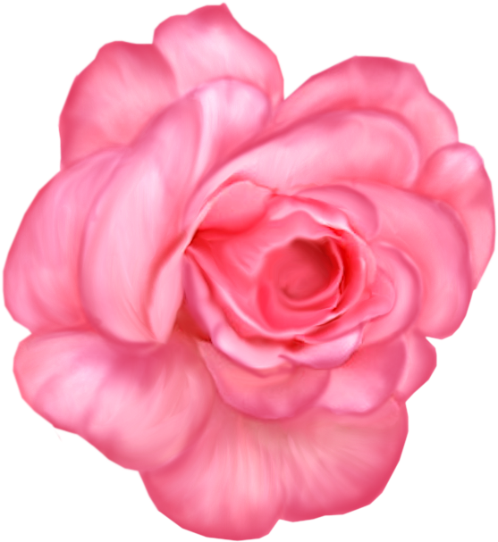 Lavender rose png. Download image with no