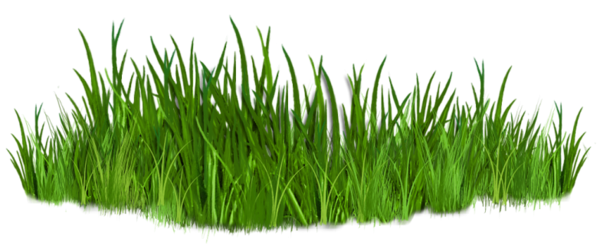 Lawn clipart tree grass. Png pinterest grasses