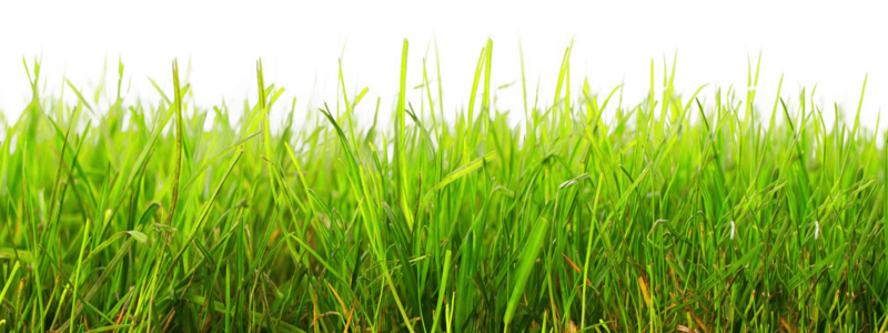 Lawn vector gress. Download free png grass