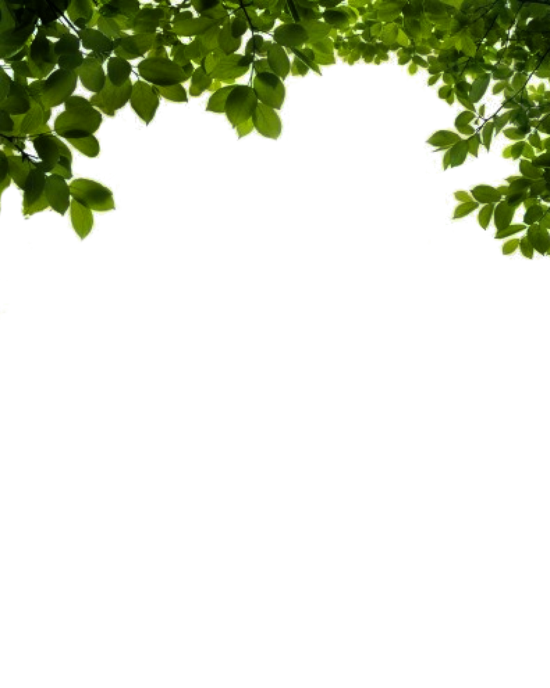 Leaf branch png. By moonglowlilly on deviantart