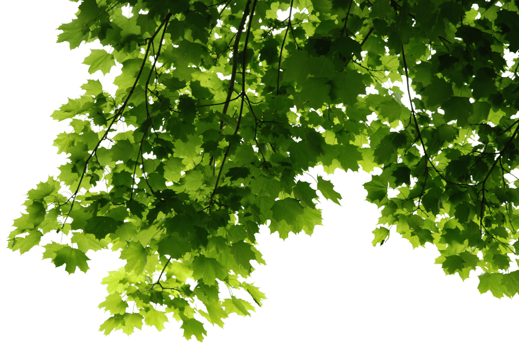 Corner transparent fall leaves. Png stickpng nature